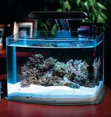Rafafatur Jual Ikan Hias Harga Ikan Hias Dan Aquarium Murah Laman 2